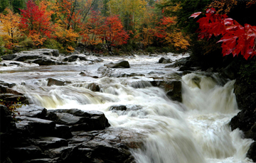 Leaves begin to change color along the Swift River in the White Mountain National Forest in Albany, N.H., Wednesday, Oct. 1, 2008.(AP Photo/Jim Cole)