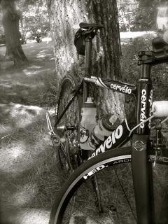 bike resting under tree