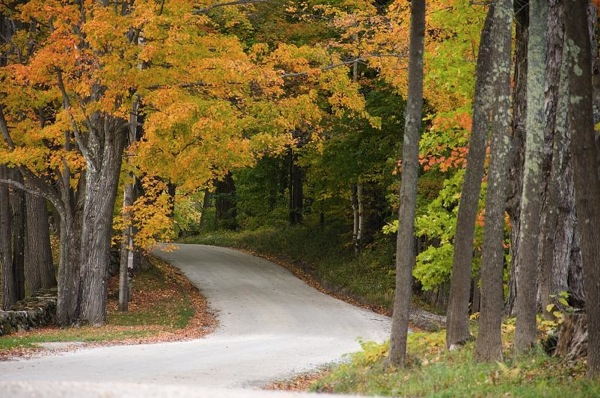 Gravel road through autumn woods.jpg